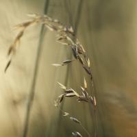 Long Grass, Fox Corner