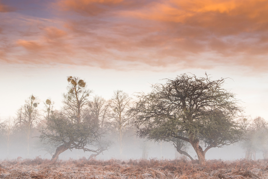 Misty Morning, Bushy Park