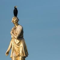Cormorant on Diana Fountain