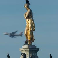 Cormorants on Diana Fountain