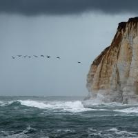 Oystercatchers, Newhaven