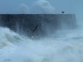 Storm at Newhaven