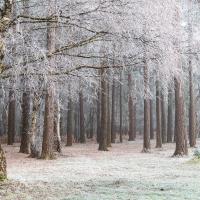 Freezing Fog XI