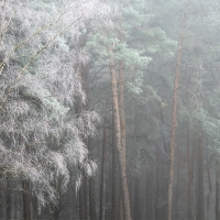 Freezing Fog IV