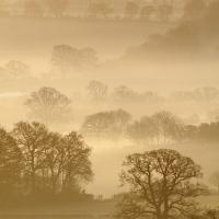 Trees, Pewsey Vale