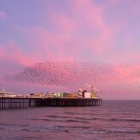 Murmuration over Brighton Pier I