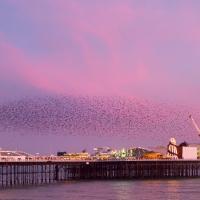 Murmuration over Brighton Pier II