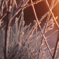Frost, Papercourt Gravel Pits