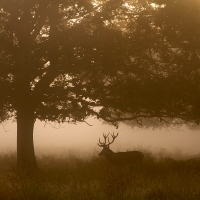 Stag Between Two Trees
