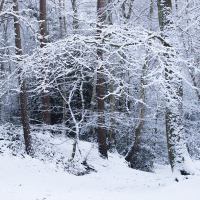 Tomlins Wood I