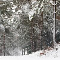 Tomlins Wood VII