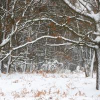Tomlins Wood IX