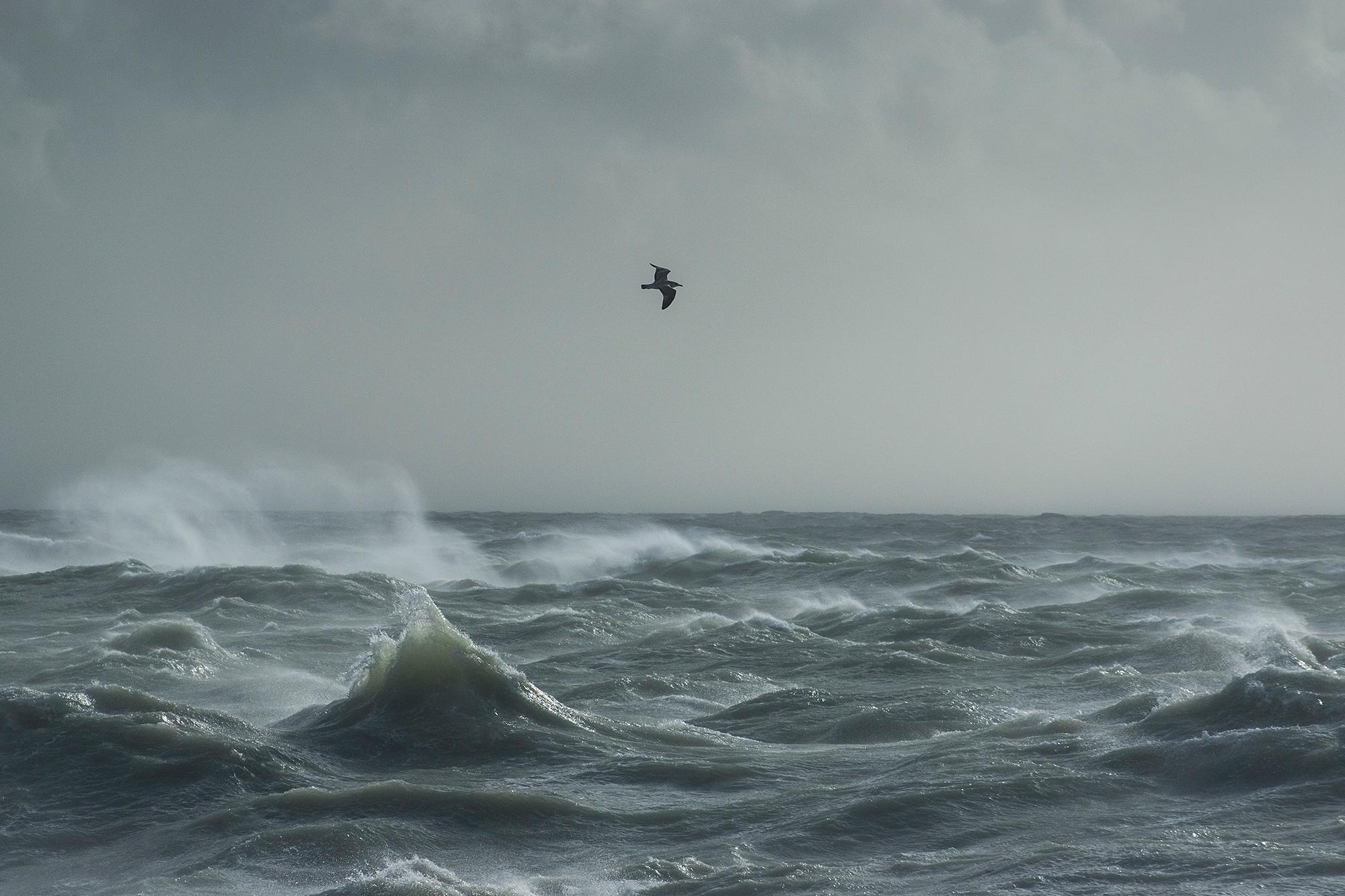 Storm Gull IV