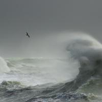 Storm Gull II