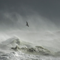 Storm Gull I