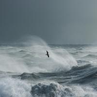 Storm Gull III