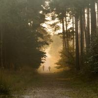 Dog Walkers, Crowthorne Wood