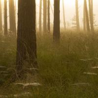 Mist and Cobwebs