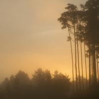 Sunrise, Crowthorne Wood
