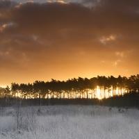 Ridge Trees and Sunrise, Crowthorne Wood