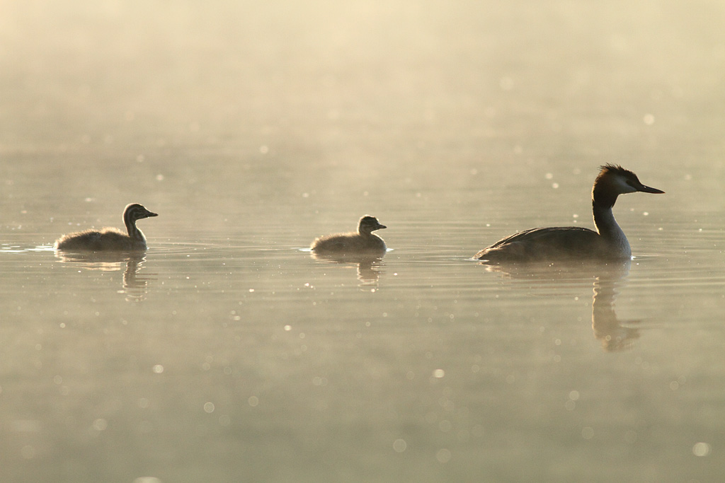 Following Mum, Warrens Pond