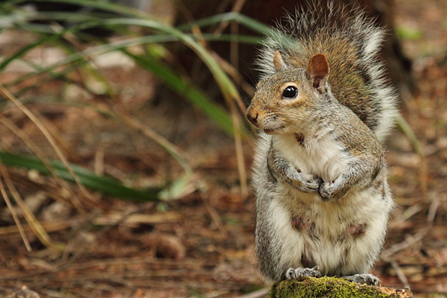 Squirrel, Centerparcs, Longleat Forest