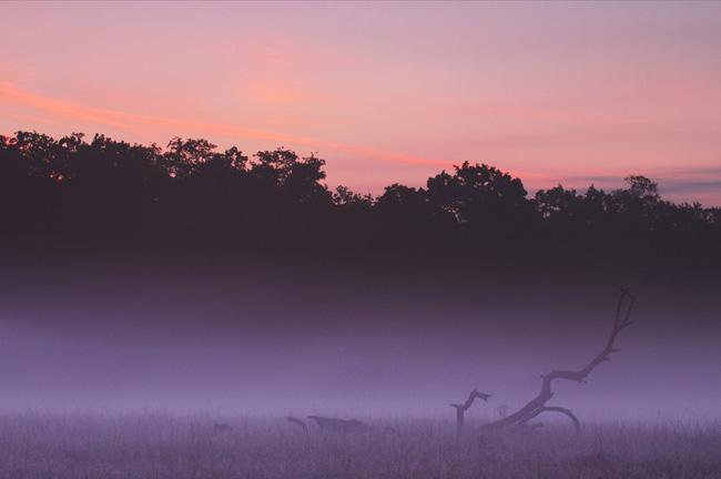 Branch in the Mist