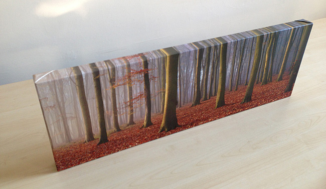 Beech Wood Panorama Canvas Wrap