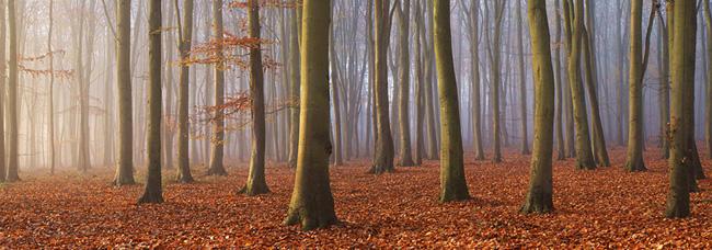 Beech Wood, Surrey