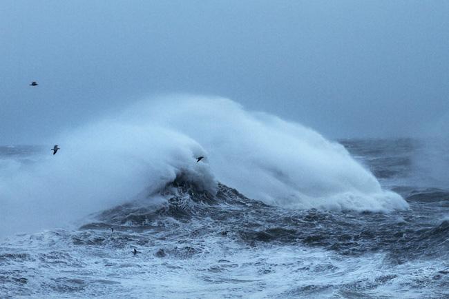 Gulls, Newhaven