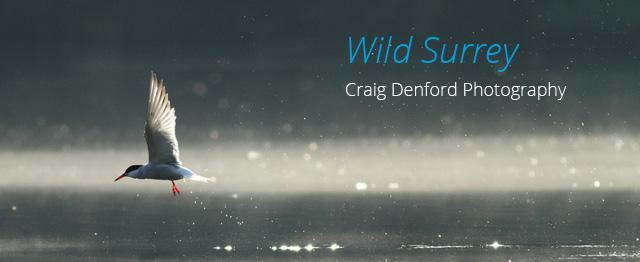 Wild Surrey