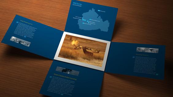 Wild Surrey Postcard Pack