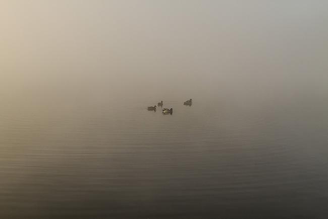 four_ducks_8405LR