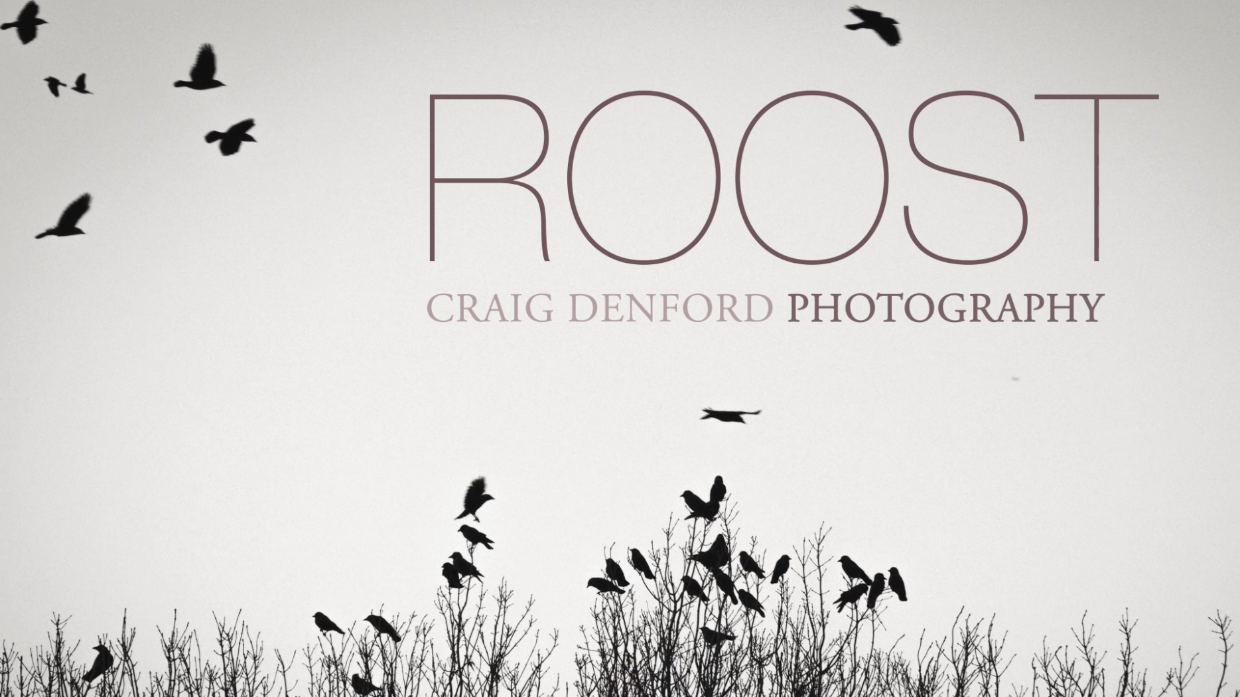 Roost Opening Titles